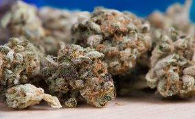Cannabis, Marihuana, Unkraut, Topf, Hanf Rubaxx