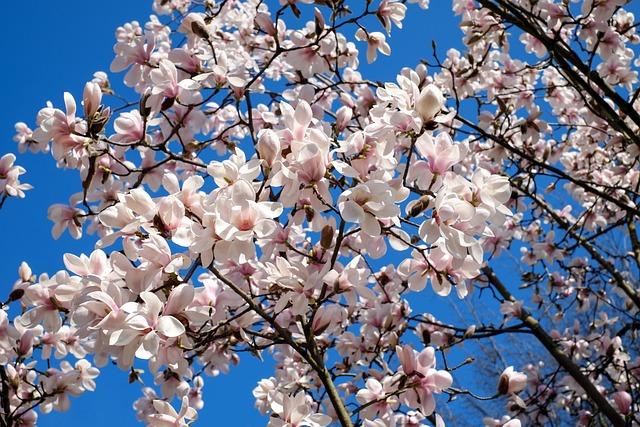 Images Of Fall Season Wallpaper Tulip Magnolia Tree Bush 183 Free Photo On Pixabay