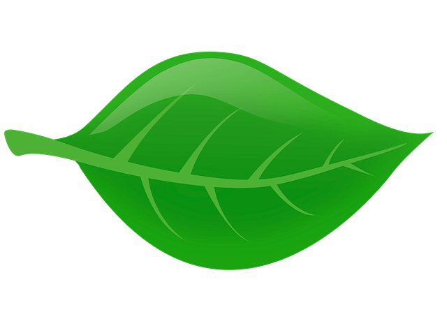 Leaf Nature Green Leaves  Free image on Pixabay
