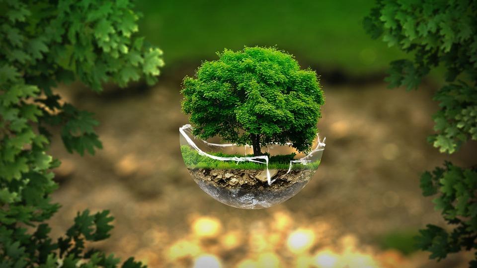 Free photo Environment Ecology Nature  Free Image on Pixabay  2196690
