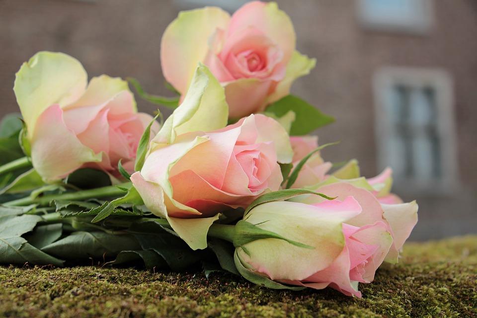 Roses Noble Flowers  Free photo on Pixabay