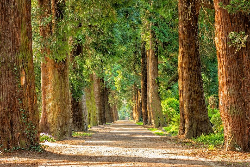 avenue trees away free