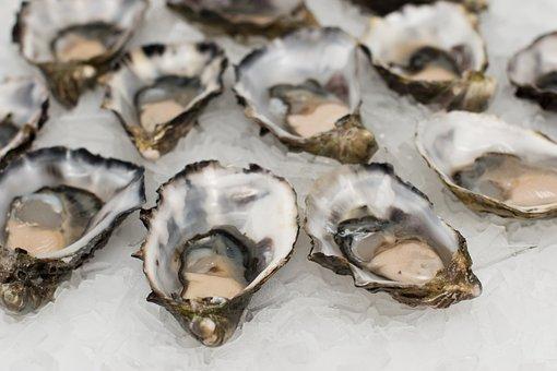 หอยนางรม, ปลาเปลือก, อาหารทะเล, เปลือก