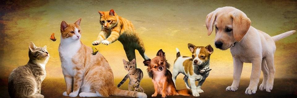 動物, 犬, 猫, 再生, 若動物, 子犬, ジャンプ, 子猫, バナー, ヘッダー, 構成します