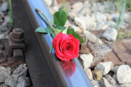 Rosa Rossa, Ferrovia, Interrompere Il Suicidio