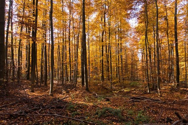 Fall Autumn Desktop Wallpaper Autumn Forest Leaves 183 Free Photo On Pixabay