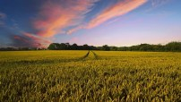 Countryside, Harvest, Agriculture, Farm