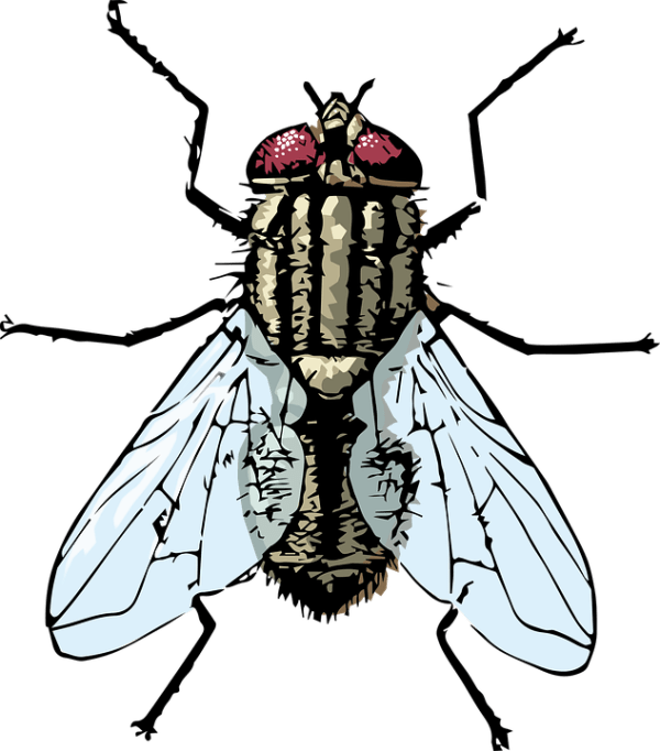 fly housefly free vector graphic