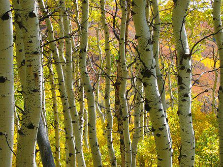 Free Wallpaper Downloads For Fall Aspen Trees Images 183 Pixabay 183 Download Free Pictures