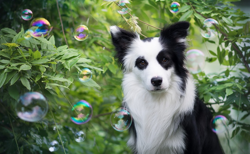 Plant, Puppy, Animal