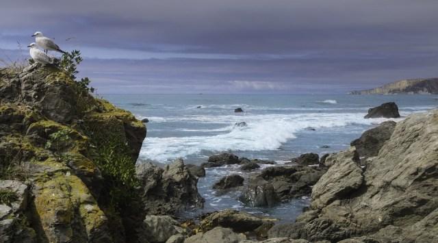 Kaikoura, Pacific Ocean, Sea, New Zealand, South Island