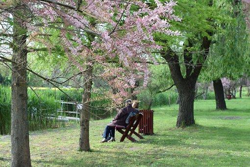 노인, 공원, 나머지, 오래 된 커플, 레크리에이션, 낡은, 호수