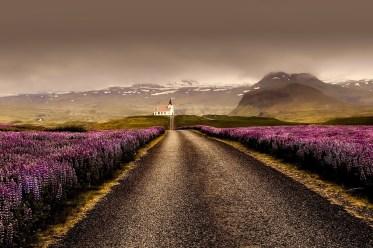 Flowers, Road, Field, Lavenders, Farm, Lavender Field