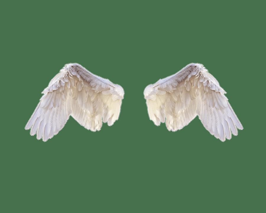 Falling Feathers Wallpaper Les Ailes Blanches Oiseau 183 Photo Gratuite Sur Pixabay