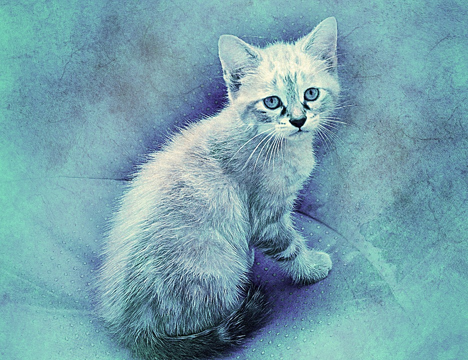 Cute Wallpaper Free To Use Cat Pet Art 183 Free Image On Pixabay