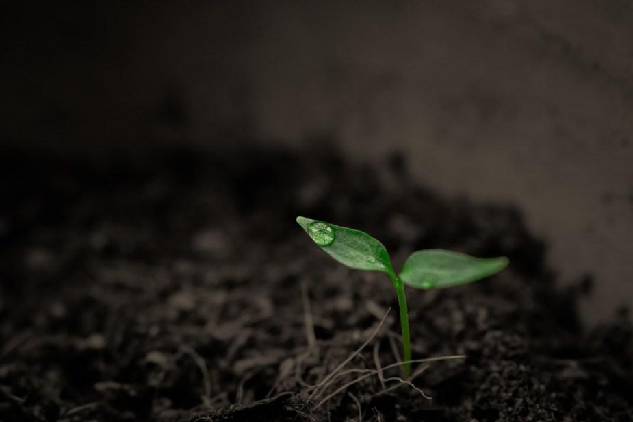 Verde, Crescita, Crescita, Pianta, Pioggia, Singolo, Singolare