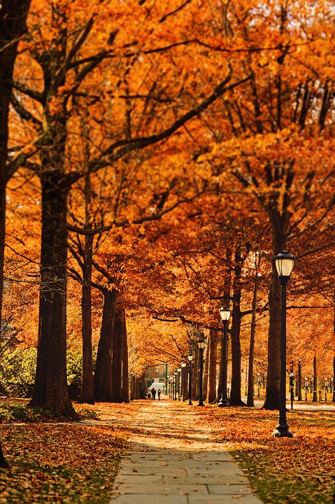 Free Fall Wallpapers Download Street Pathway Leaf 183 Free Photo On Pixabay