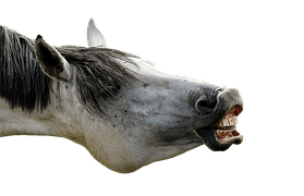 Free photo Pony Horse Making A Face Funny  Free Image on Pixabay  54014