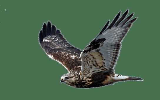 800 free hawk eagle