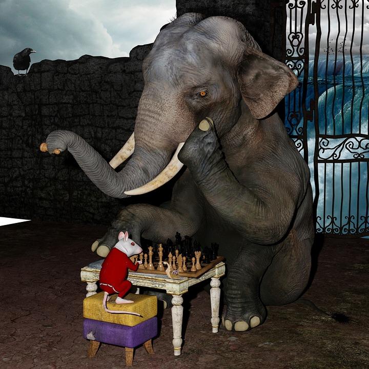 Play Chess Elephant Mouse  Free photo on Pixabay