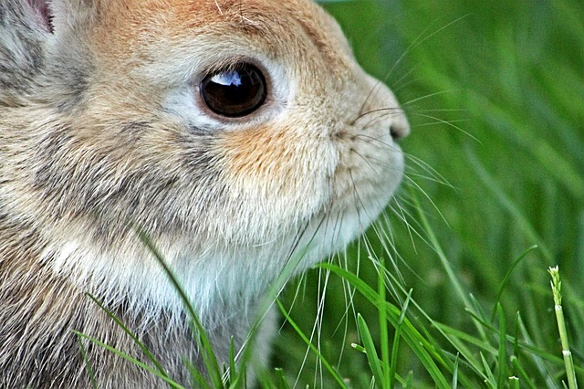 Beautiful Animal Pictures Wallpaper Dwarf Rabbit Easter 183 Free Photo On Pixabay