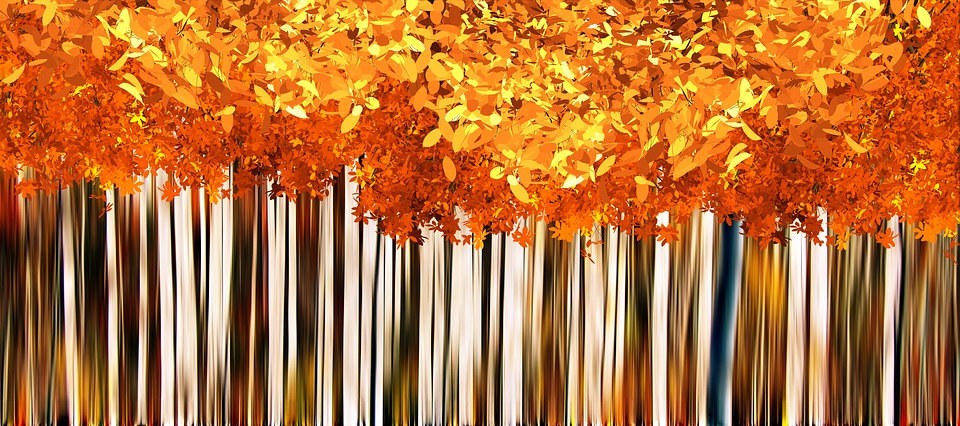 Fall Leaves Road Wallpaper Fall Autumn Background 183 Free Image On Pixabay
