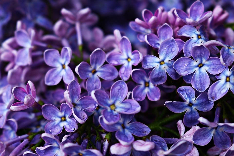Flower Desktop Wallpaper