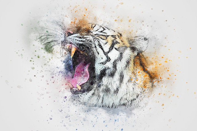 Tiger Roar Animal 183 Free Image On Pixabay