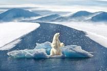 Polar Bear, Cambiamento Climatico, Orso Polare, Bear