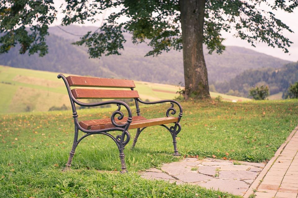 bench park tree free