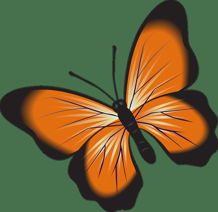 butterfly orange clip art
