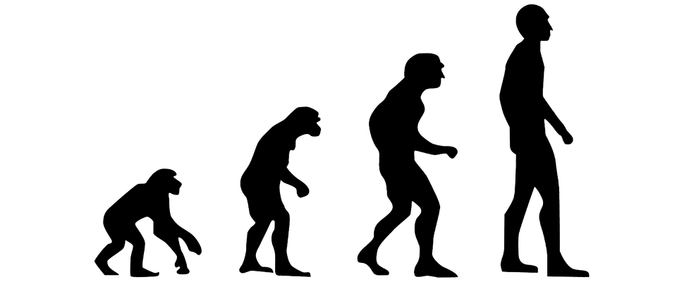 Evolution Human The · Free image on Pixabay