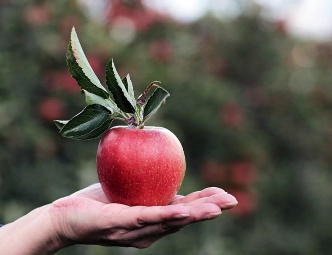Apple, Vermelho, Maçã vermelha, Mão, Pomar de maçãs, Delicioso