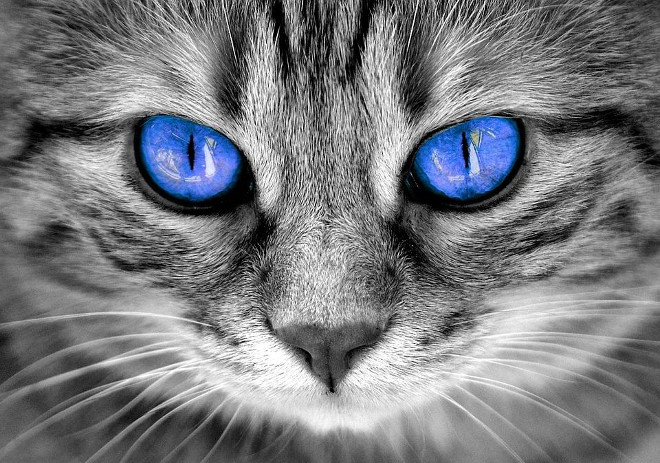 cat eyes cat s