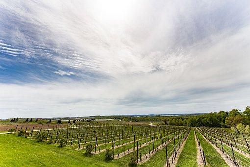 ブドウ園, ワイナリー, ブドウ, ワイン, トラヴァースシティ, ミシガン州