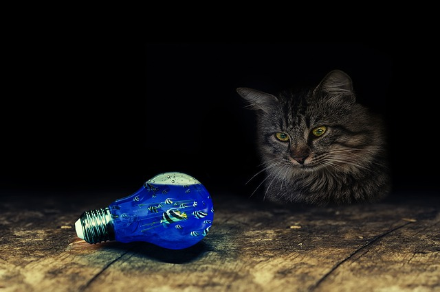 Cute Kitty Wallpapers Free Light Bulb Cat Fish Table 183 Free Photo On Pixabay