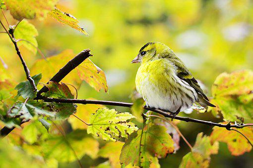 90 000 Incredible Bird Pictures Images Hd Pixabay