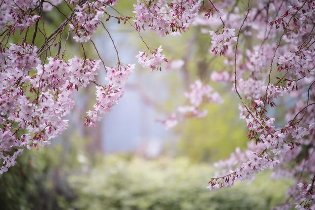 Animated Wallpapers Hd 1080p Pink Spring Nature 183 Free Photo On Pixabay