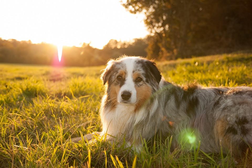 Summer Wallpaper Hd Sun Sunset Dog 183 Free Photo On Pixabay