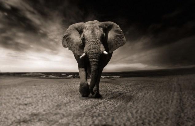 Слон, Животных, Африка, Сафари, Диких Животных, Тварь