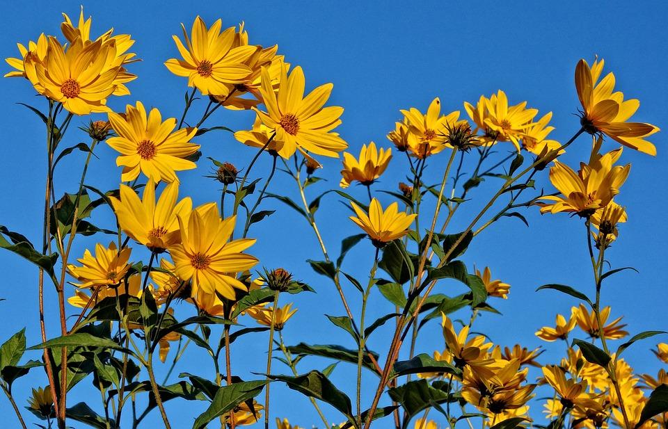 flower yellow blue skies