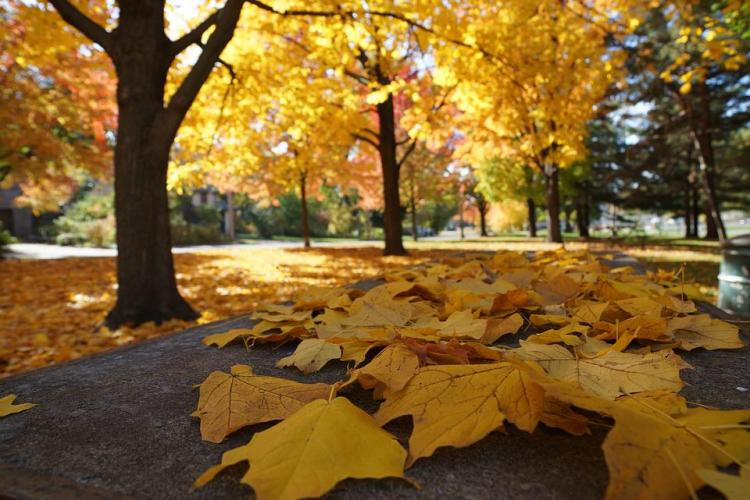 Autumn, Thanksgiving, Halloween, Fall, Leaves, Yellow