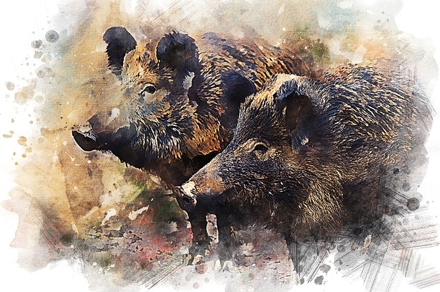 Wild Boar Pig Animal  Free image on Pixabay