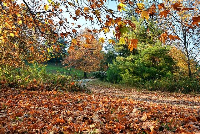 Vector Wallpaper Fall Colors Autumn Season Nature 183 Free Photo On Pixabay