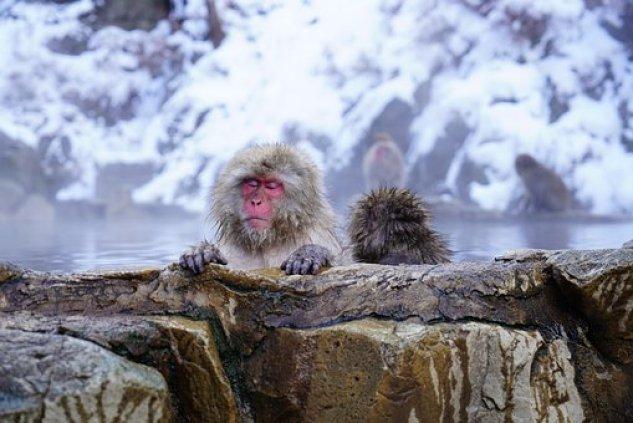 長野, モンキー, 温泉, 日本