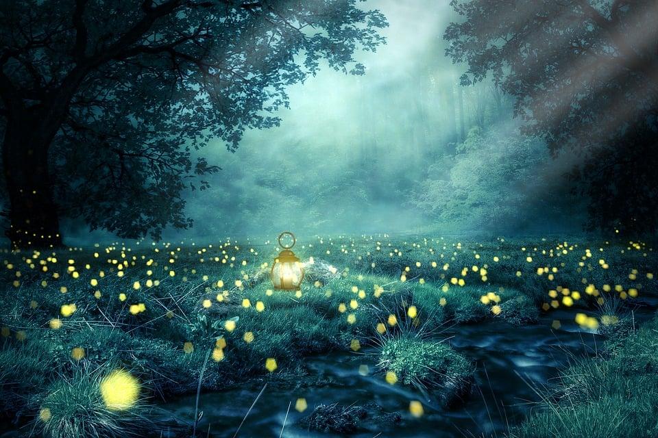 night forest glowworm free