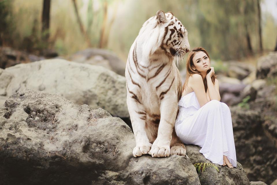La Naturaleza, Mundo Animal, Tigre De Bengala Blanco