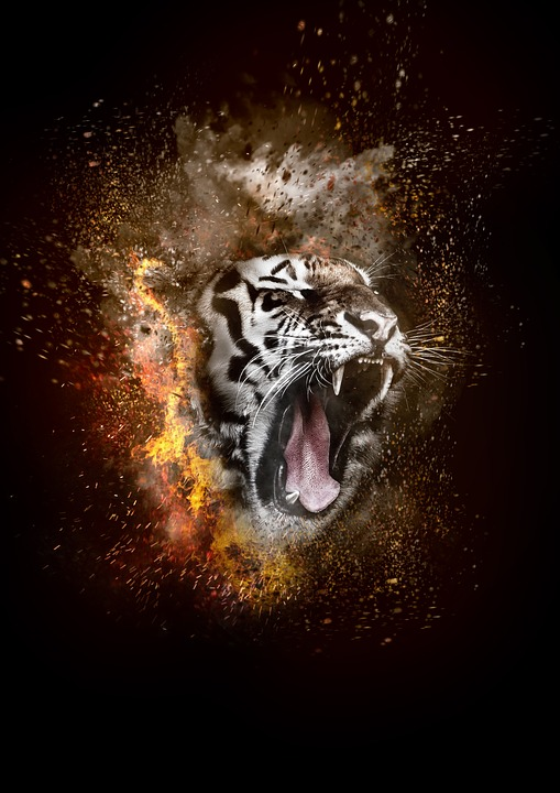 Cat Wallpaper Hd Tiger Fire Smoke 183 Free Photo On Pixabay