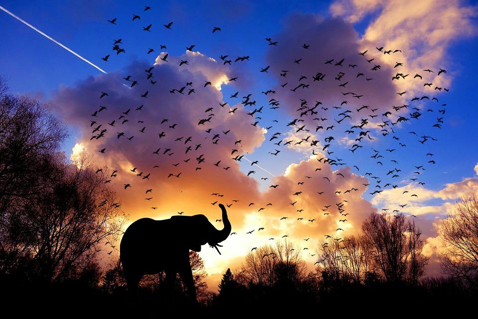 象, 鳥, 朝, アフリカ, ジャングル, 空, クラウド, 風景, 太陽, 光, 雄大な, パノラマ, 自然