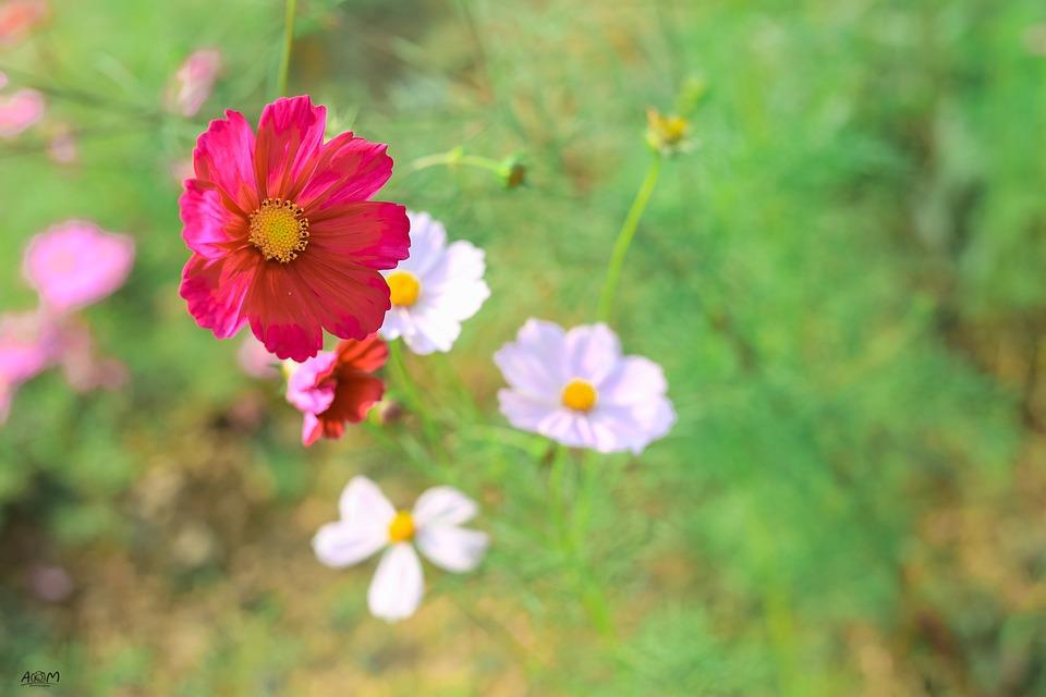 Wallpaper Hippie Girl Flowers Pretty Beautiful 183 Free Photo On Pixabay